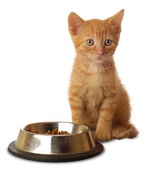 Купить Корм сухой для кошек