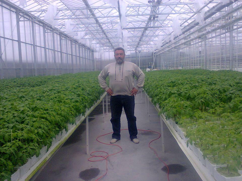 Купить Теплицы промышленные ,Тепличные оборудования , Greenhouses