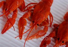 Crayfish tinned