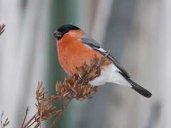 Тур Наблюдение за птицами