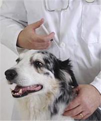 Лечение хронических заболеваний собак и кошек в стационаре