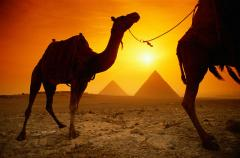 Туры в Египет 2012